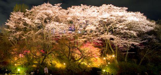 佐伯区 広島市植物公園