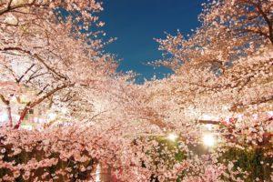 夜桜 ライトアップ 広島